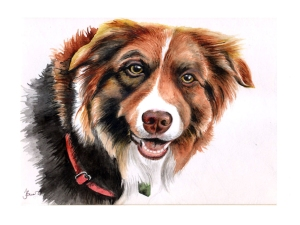 Watercolour of a beautiful red collie. Sold