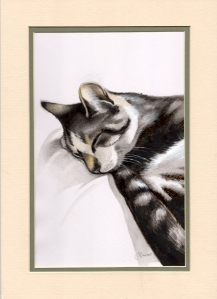 Noori - a very relaxed tabby cat