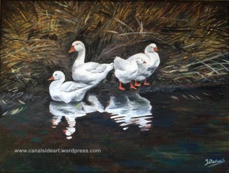 Rylands Ducks for web