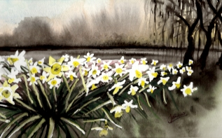 Spring Beeston Daffodils. Watercolour
