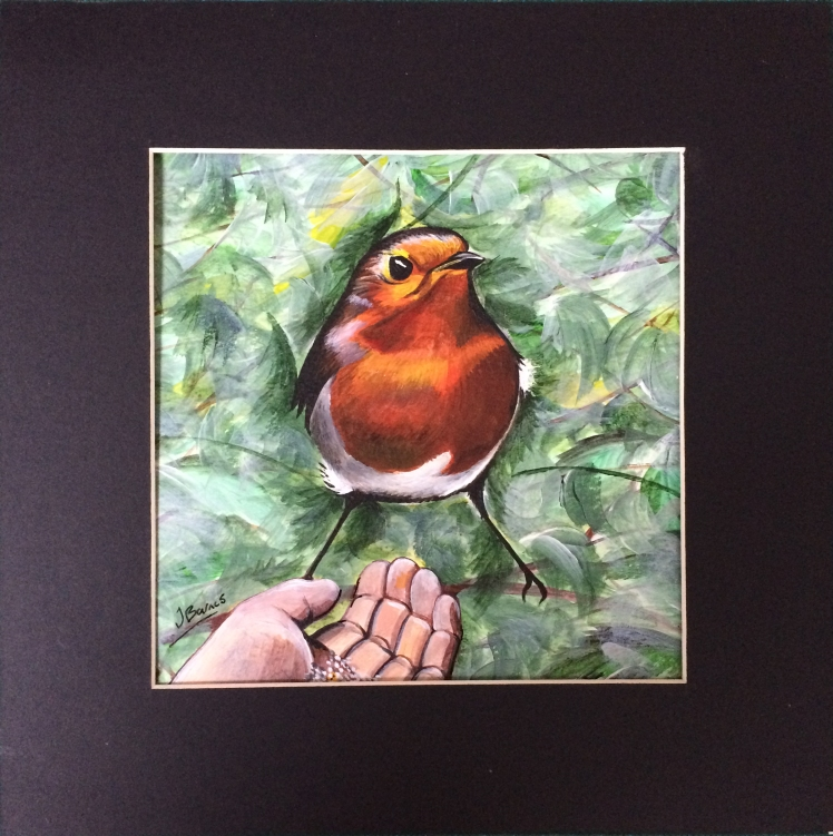 robin-eating-from-hand