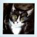 """""""Sox"""" Watercolour Pet Portrait. Sold"""