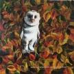 """Barn Owl"" Original Oil on Canvas. 40 x40cm. £69.00"